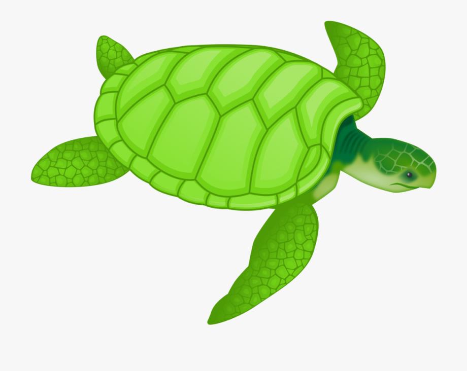 Ocean animal sea . Pet clipart green turtle