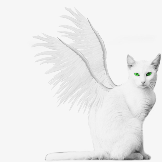 Cats clipart angel. White cat pet png