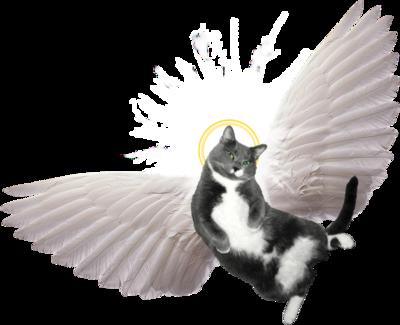 Cats clipart angel. Image cat clip art