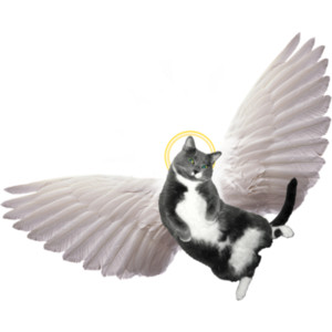 Cats clipart angel. Free cat cliparts download