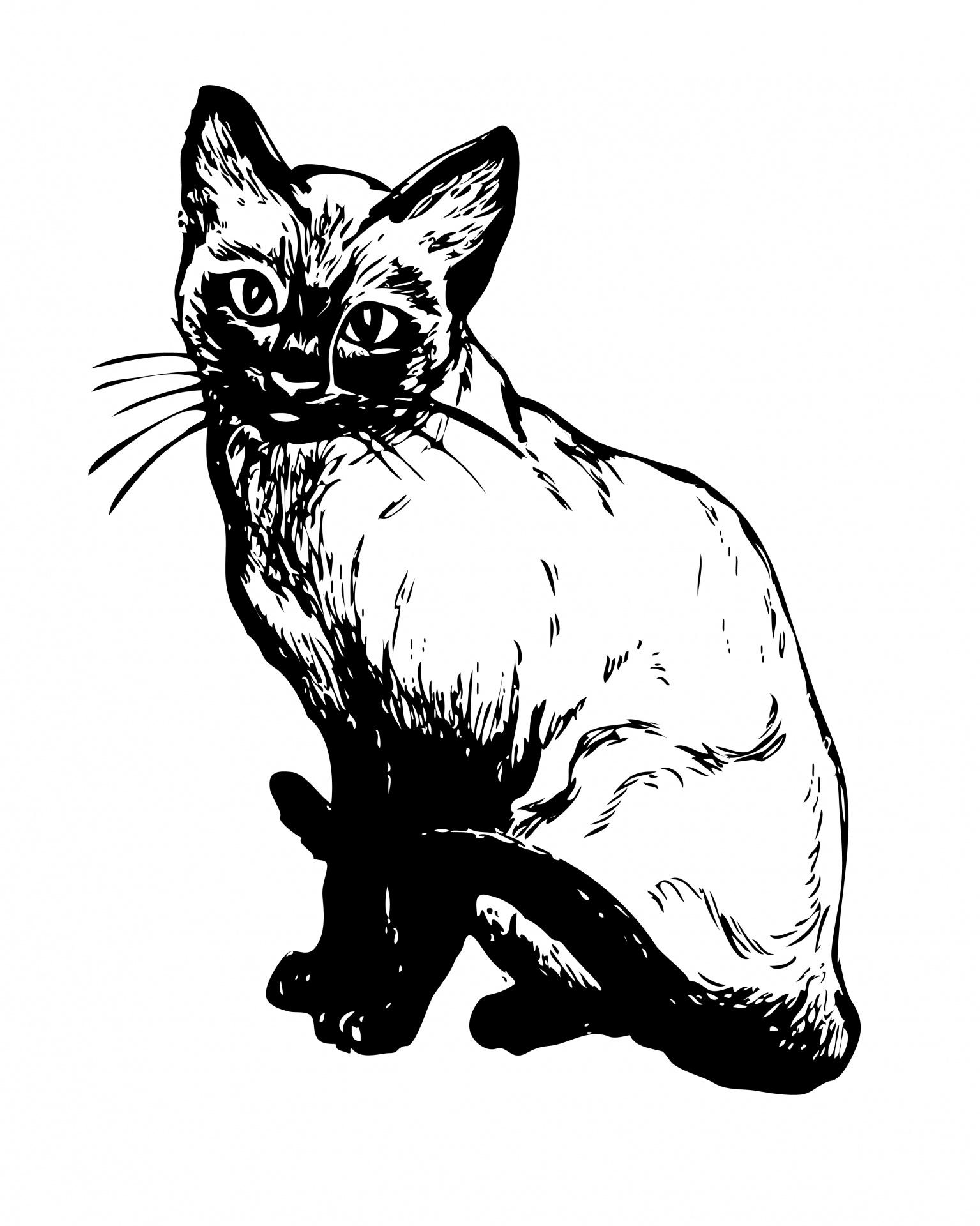 Siamese free stock photo. Cat clipart illustration