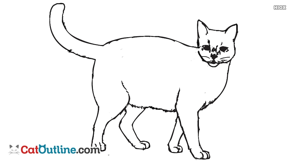 Free cat catoutline com. Cats clipart outline