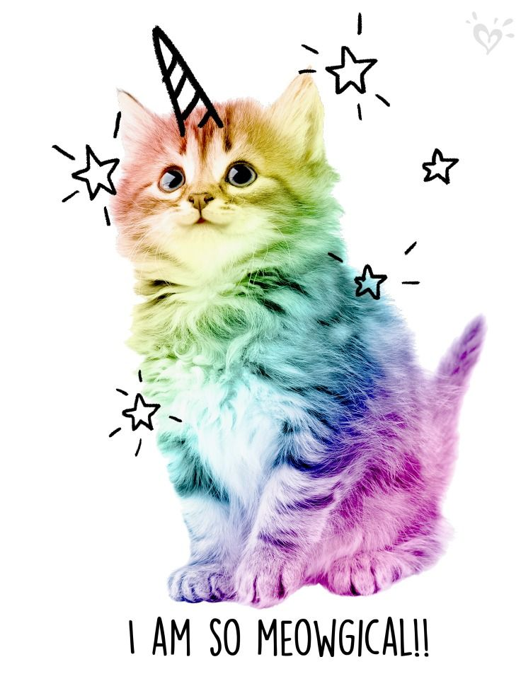 The best side of. Cats clipart unicorn