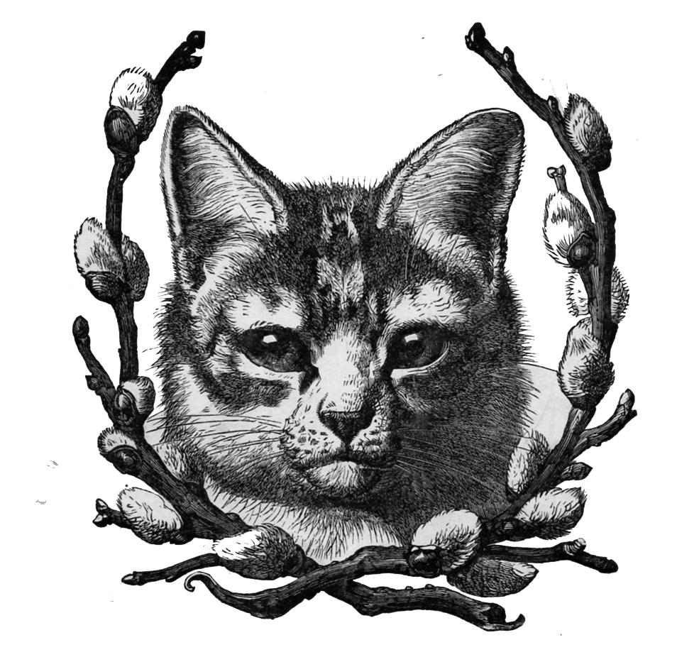 The moth clip art. Cat clipart vintage