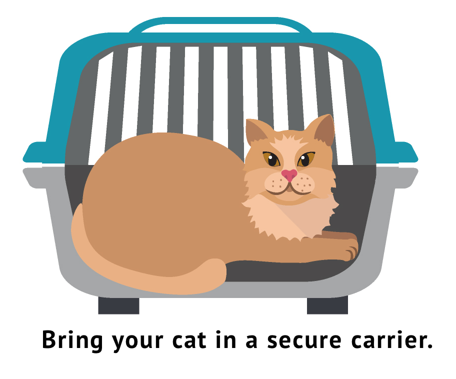 Pals monthly clinic for. Cat clipart water