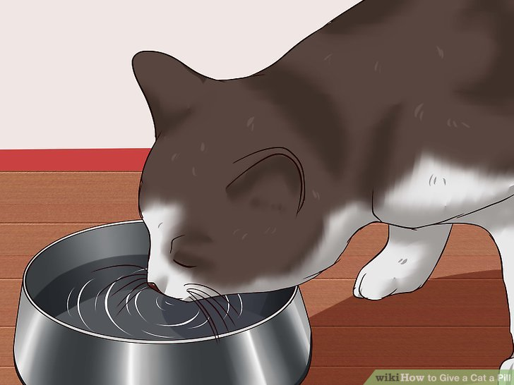 ways to give. Cat clipart water