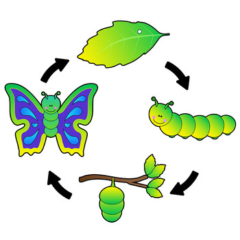 Cycle clipart life cycle. Butterfly clip art sequence