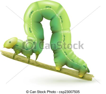 Caterpillar clipart green worm. Realistic pencil and in