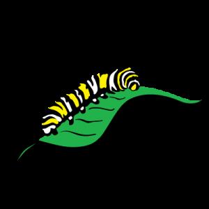 Caterpillar clipart monarch. Editor s choice citizen
