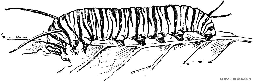 Clipartblack com animal free. Caterpillar clipart monarch