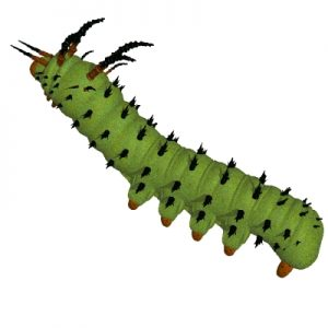 Free panda images clip. Caterpillar clipart painted lady