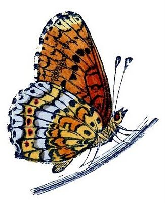 Caterpillar clipart painted lady.  best insects etc