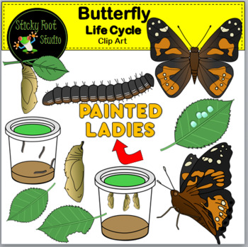 Life cycle of a. Caterpillar clipart painted lady
