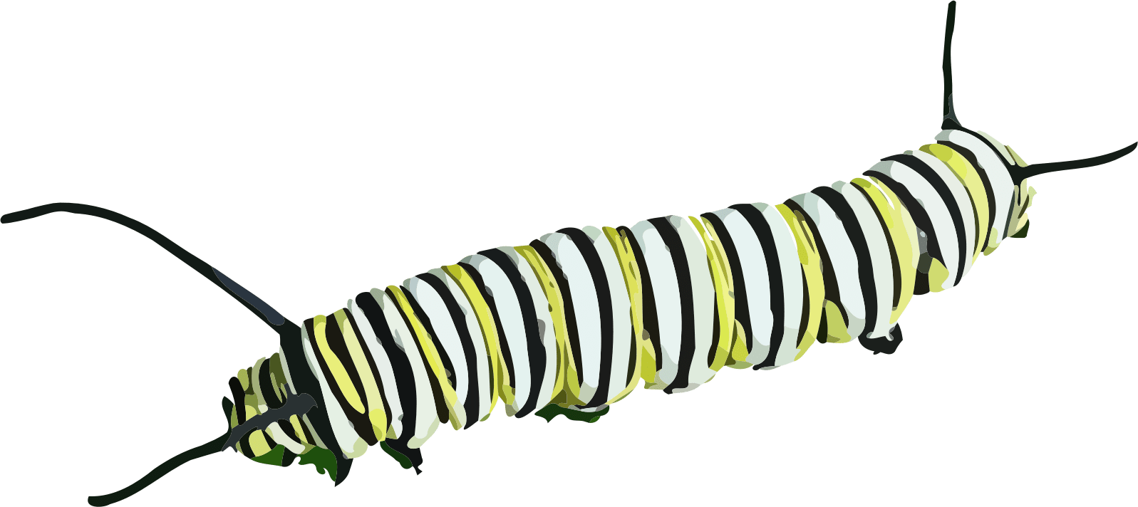 Insects clipart transparent background. Caterpillar png stickpng