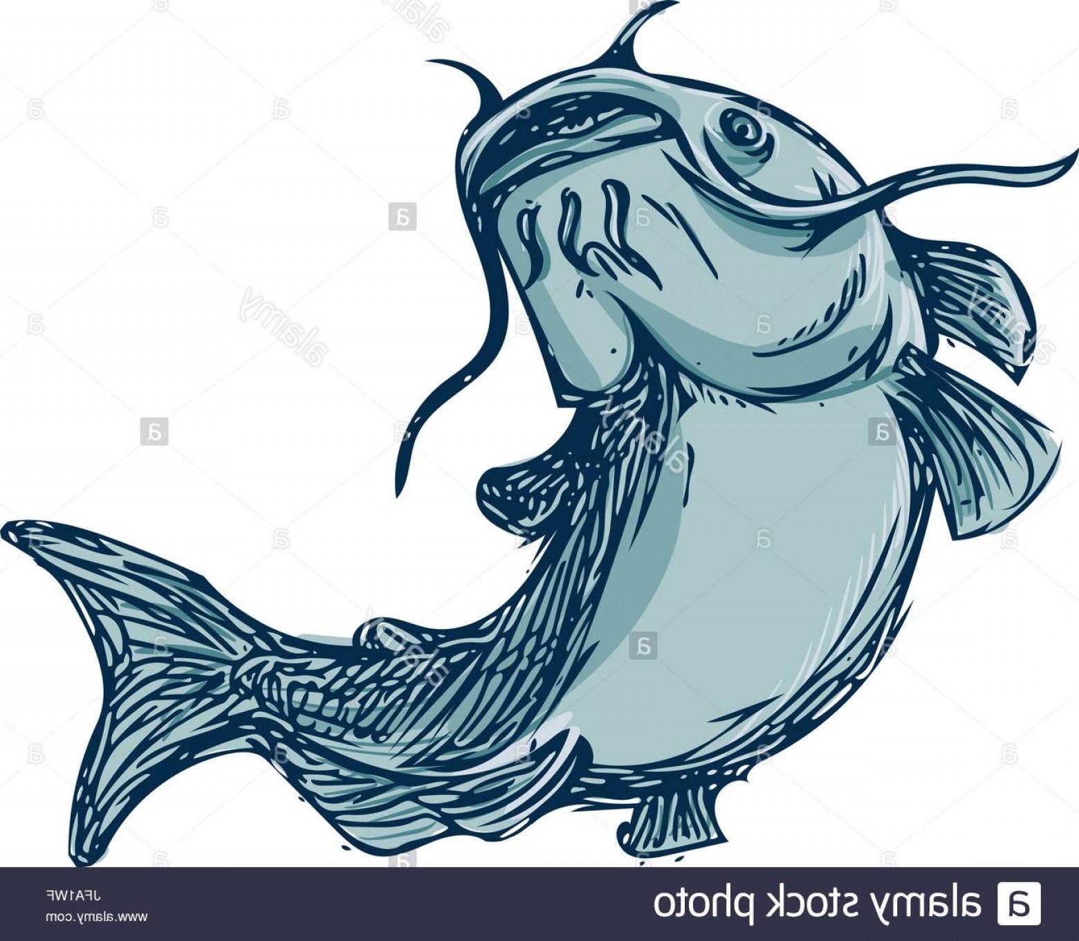 Stock photo mud cat. Catfish clipart blue catfish
