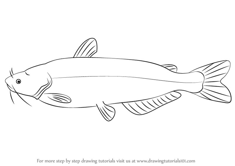 Learn how to draw. Catfish clipart blue catfish