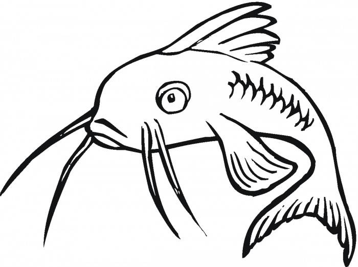 Catfish clipart cartoon. Download drawing easy clip
