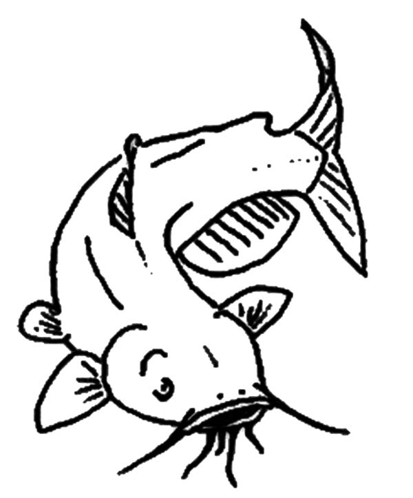 Drawing images at getdrawings. Catfish clipart channel catfish