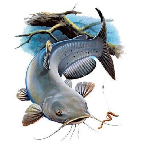 Image result for blue. Catfish clipart channel catfish