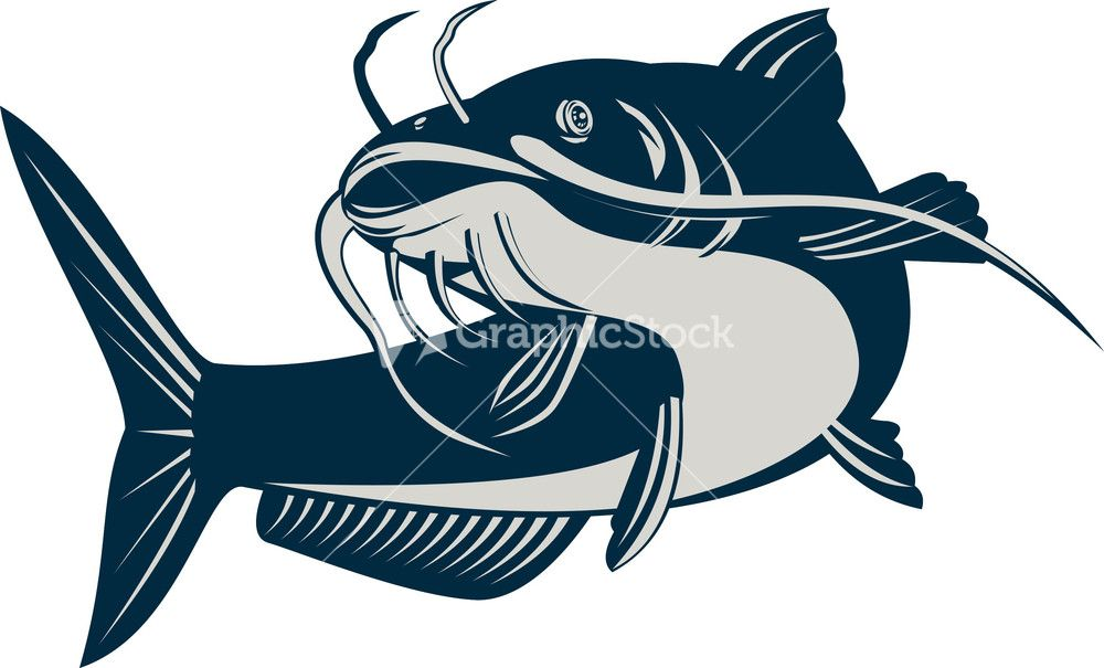 Catfish clipart channel catfish. Jumping stock image drawings