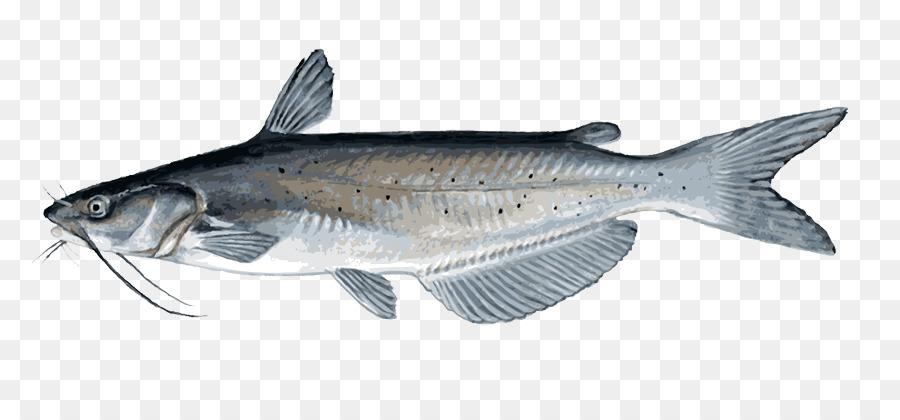 Catfish clipart channel catfish. Fish cartoon transparent clip