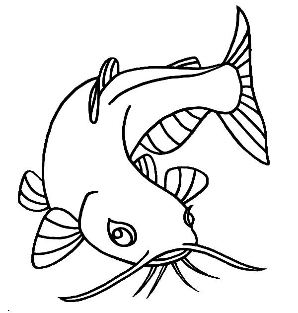 Catfish clipart coloring page. Channel drawing at paintingvalley