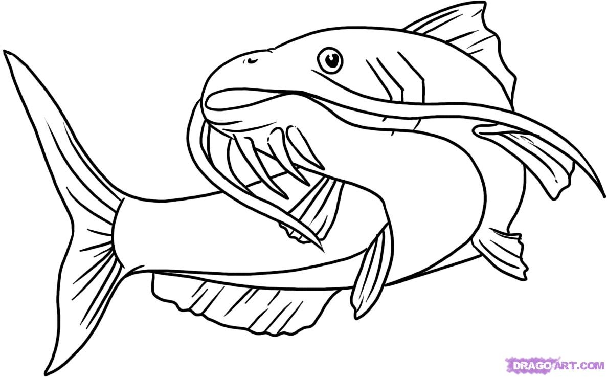 Catfish clipart coloring page. Best of collection digital