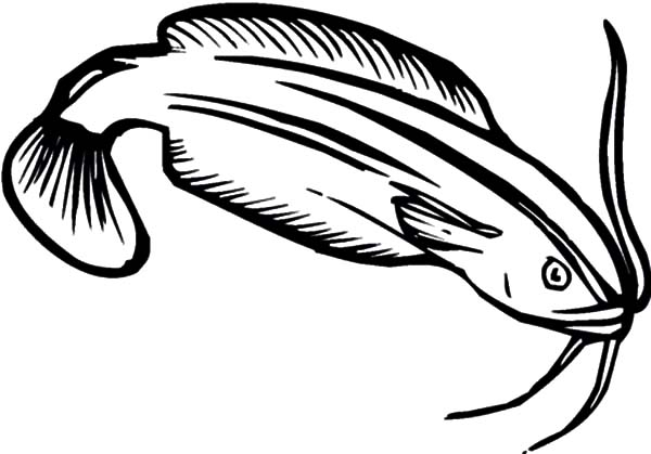 Catfish clipart coloring page. Collection of free download