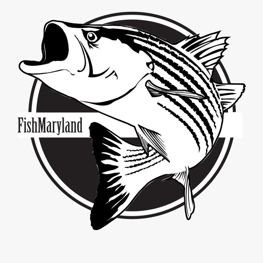 Catfish clipart game fish. Black and white fishing