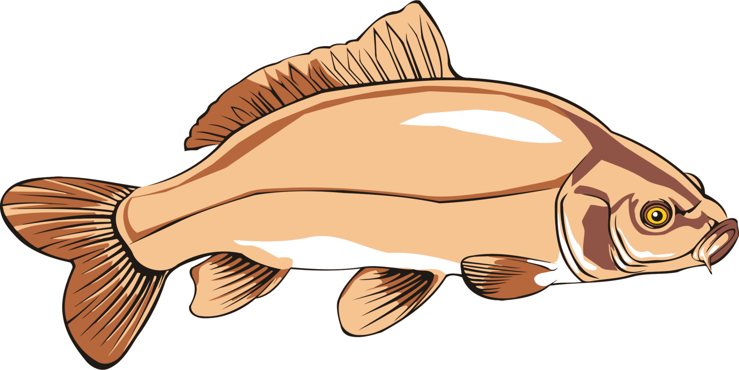 Trout clipart carp. Food seafood fish products