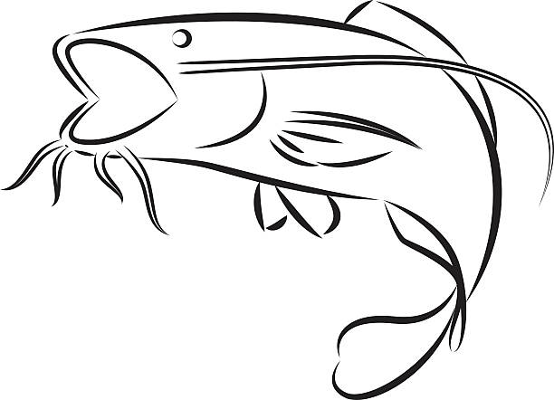 Catfish clipart outline. Channel drawing at getdrawings