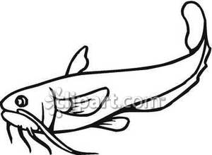 Catfish clipart outline. Common royalty free picture