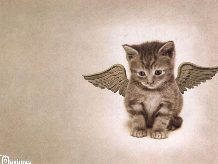 Cats clipart angel.  best angels with