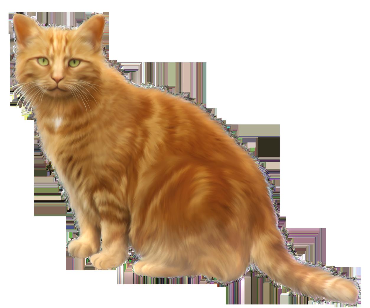 Orange transparent png gallery. Hand clipart cat