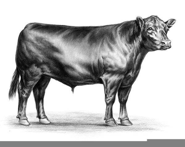 Black free images at. Cattle clipart angus cattle
