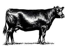 Cattle clipart angus cattle. Free clip art merchandise