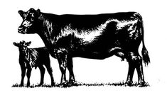 Free clip art merchandise. Cattle clipart angus cattle