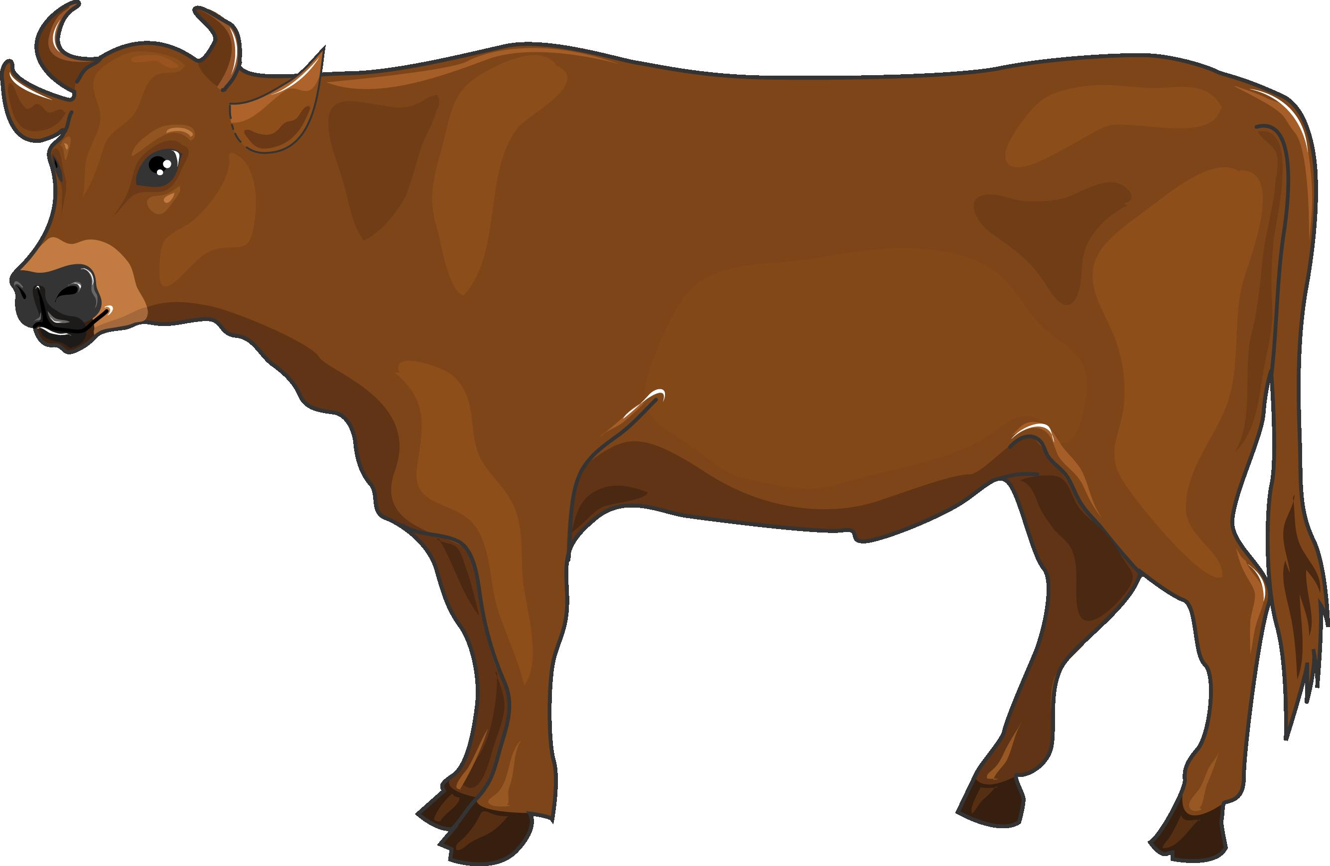 Ox clipart propensity. Beef servier medical art