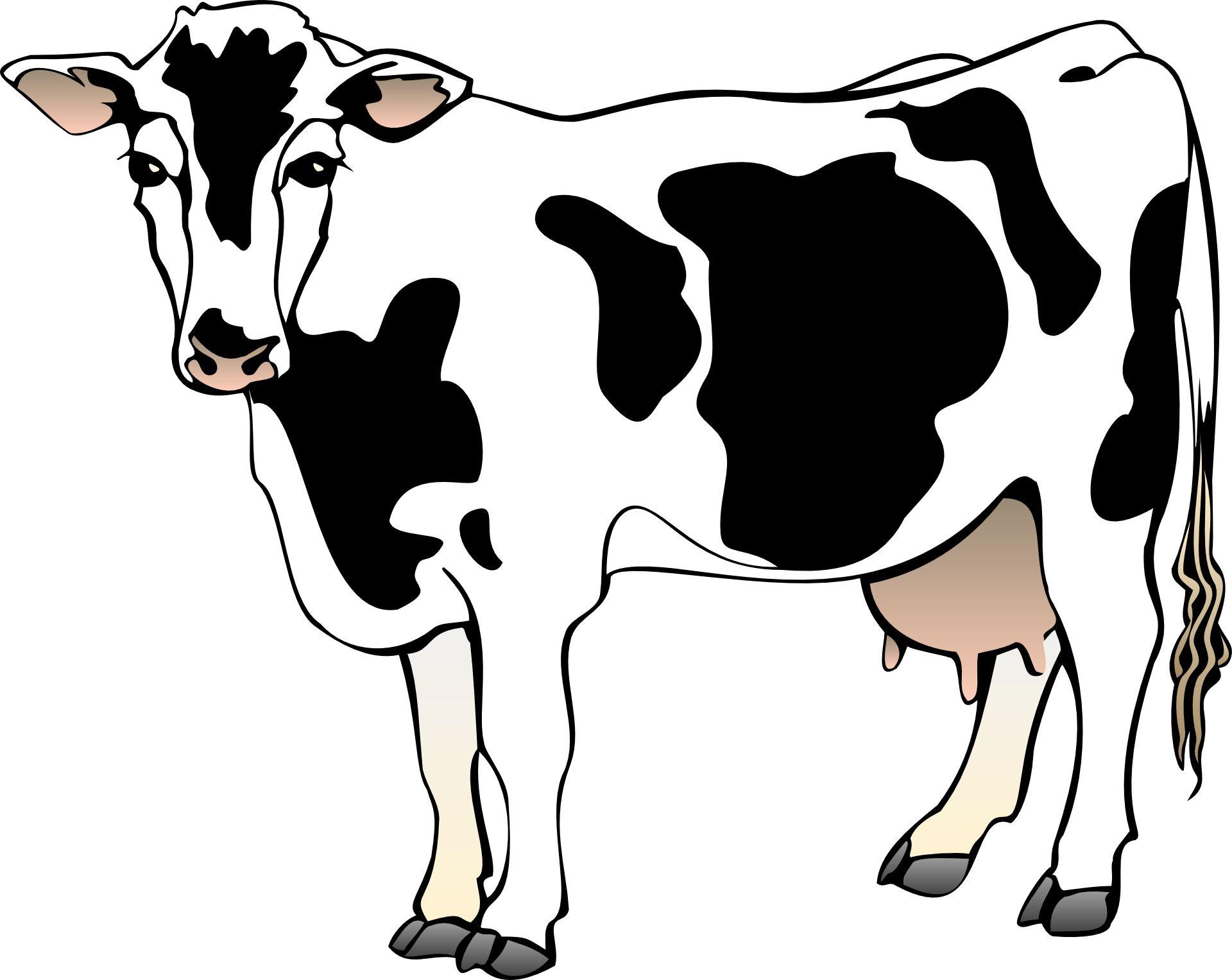 Cow clipart livestock. Vector cartoon animal free