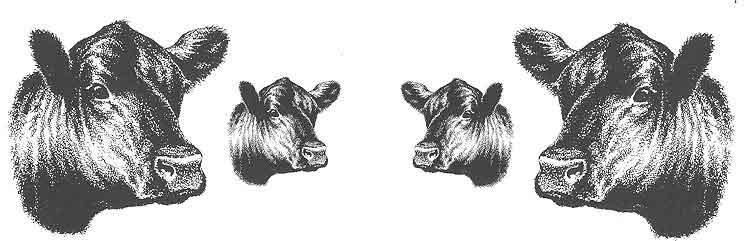 Angus clip art . Bull clipart profile