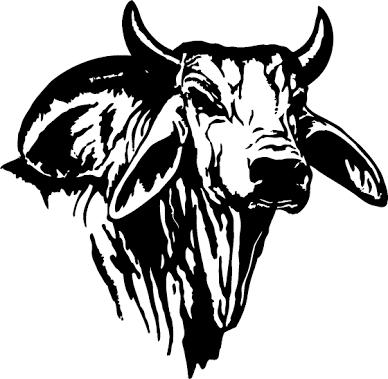 Cattle clipart brahma bull. Image result for black