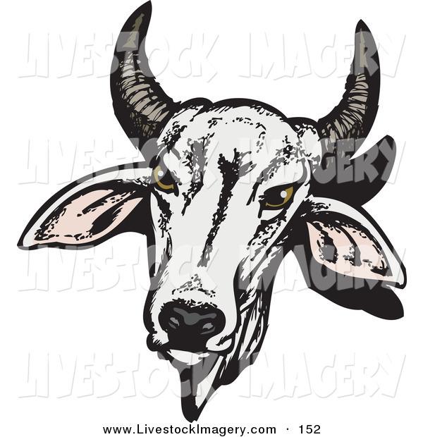 Clip art of a. Cattle clipart brahma bull