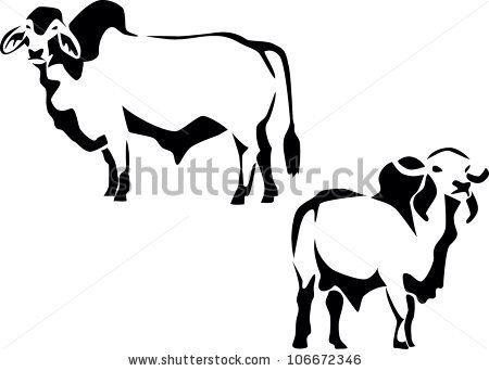 Brahman logo silhouette art. Cattle clipart brahma bull