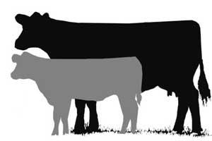 Cattle clipart cattle herd. Iowa beef center a