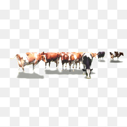 Png vectors psd and. Cattle clipart cattle herd