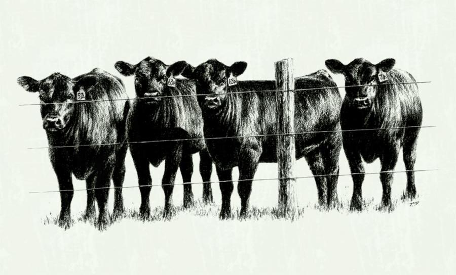 Cattle clipart cattle herd. Download beef farming quotes