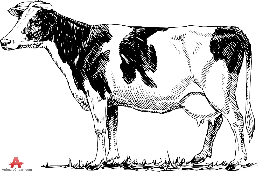 Cattle clipart cow drawing. Images at getdrawings com