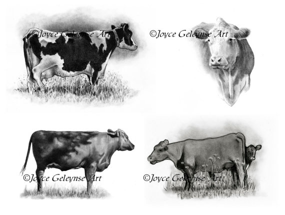 Art cows hand drawn. Cattle clipart cow drawing