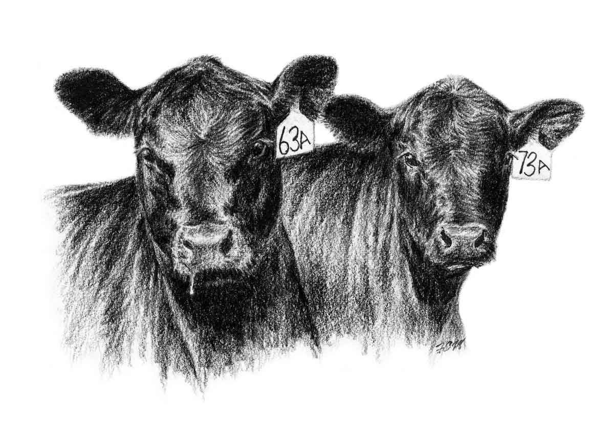Cattle clipart cow drawing. Angus clip art cows