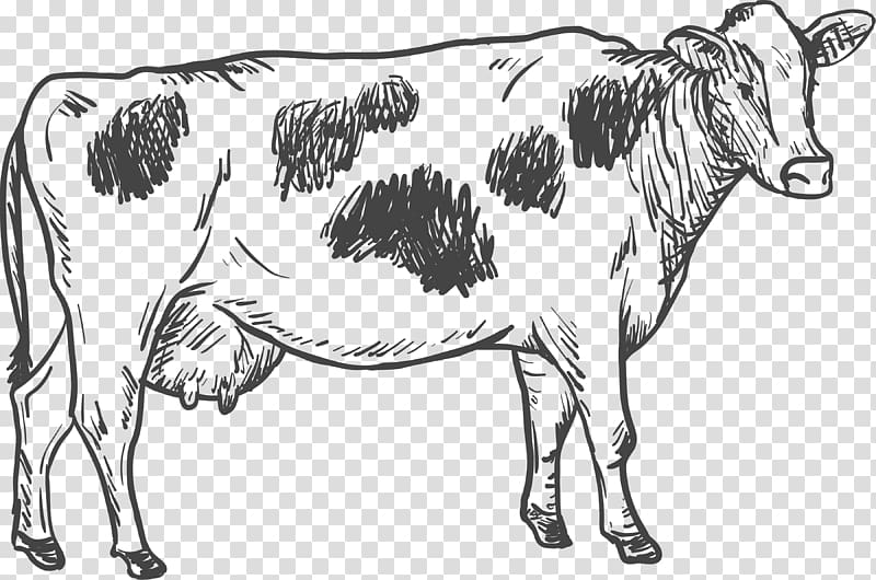 Illustration dairy . Cattle clipart cow drawing